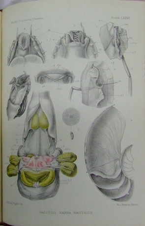 Plates from 19th century Zoological work (UCD Special Collections)