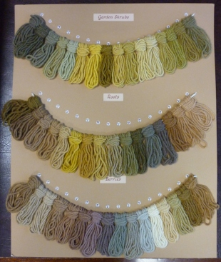 Wool samples dyed from garden shrubs.