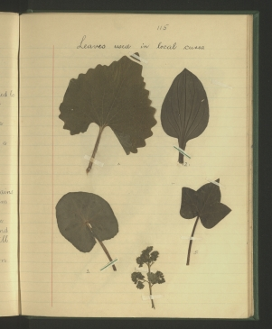 Leaves used in local cures.
